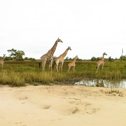Botswana Safari, Africa
