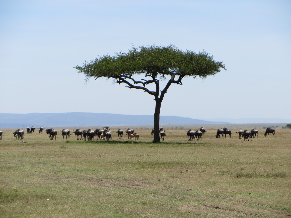 Kenya, Africa, Safari