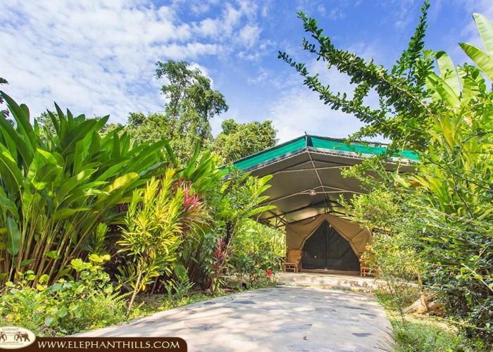 elephant camp, thailand