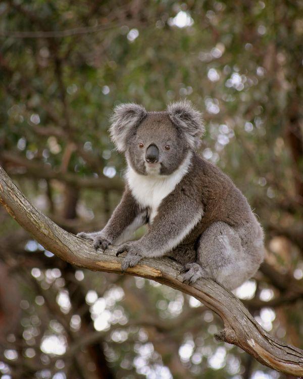 victoria blog -australia