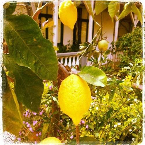 Lemons, Italy