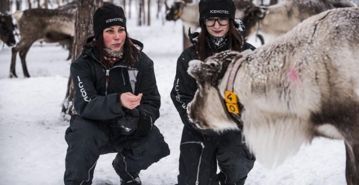 Reindeer Experience, Ice Hotel, Scandinavia, Sweden