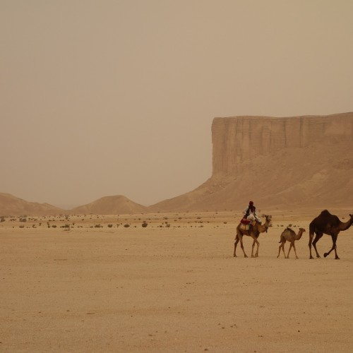 camel-train-3408458_1920